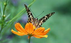 Butterfly by J A T M I K O