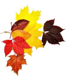 Stock image of 'Colorful autumn leaves over white background with clipping path'