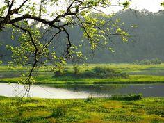 Die unberührte Landschaft im Cat Tien Nationalpark - #AsiaticaReisen