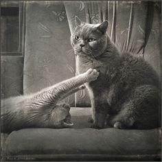 photo: Grey Love | photographer: Andy Prokh | WWW.PHOTODOM.COM