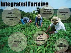 sustainable+agiculture+designing+small+farm | Integrated farms, green value chains, environmental governance – The ...