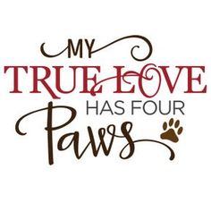 Silhouette Design Store - View Design my true love has 4 paws Animal Quotes, Dog Quotes, I Love Dogs, Puppy Love, Dog Signs, My True Love, Silhouette Design, Cat Silhouette, Silhouette Store