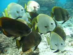 Fish, Borneo | Dive, travel and volunteer for Marine Conservation at www.frontiergap.com | #dive