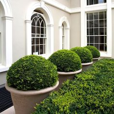 we have awesome artificial boxwood balls and faux boxwood hedge panels.check out my boards!we have awesome artificial boxwood balls and faux boxwood hedge panels.check out my boards! Boxwood Landscaping, Boxwood Garden, Garden Planters, Backyard Landscaping, Inexpensive Landscaping, Boxwood Hedge, Modern Landscaping, Backyard Patio, Landscaping Ideas