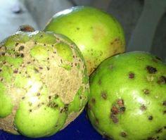 Guava by Julie Marie Cortez.