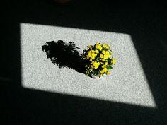 Cómo aumentar la humedad para plantas de interior, ¡evita que sufran!