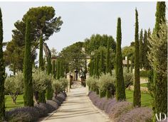 Lavender Alley - Frédéric Fekkai's Vacation Home in the South of France   Architectural Digest   (olive trees, lavender, and Provençal cypress, a symbol of welcome)