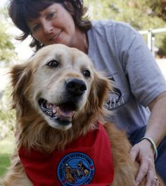 Therapy dogs international - everything about training a therapy dog