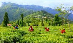 Darjeeling Gangtok & Kalimpong 6 Nights Package