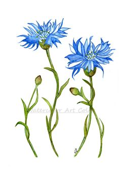 Cornflower Print Botanical Illustration, Painting Blue Floral Living Room Decor, Meadow Flower Minimalist Art Home Decor  Wallhanging