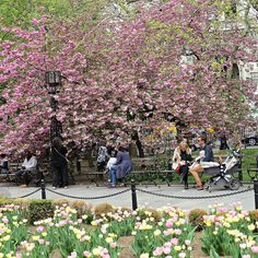 City Hall Park, New York City. April 30, 2015.