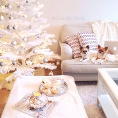 Image via We Heart It #chihuahua #chihuahuas #christmas #cosy #cozy #december #decoration #decorations #dogs #family #february #happy #home #inspiration #inspo #interior #life #livingroom #love #room #snow #sun #white #winter #christmastree #christmaseve #januari #merrychristmas #inspomotivation #christmastreedecorations