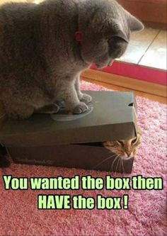 Funny Animal Pictures Of The Day – 20 Pics