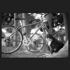 Ruby May 2015 #cat #smallcats #blackandwhitephotography