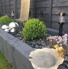 Garden, Plants, Garten, Lawn And Garden, Gardens, Plant, Gardening, Outdoor, Yard