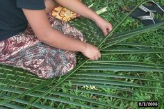 Palm Frond Weaving:  A pretty good guide, lots of pictures (which is always a plus)...Important stuff, cuz you never know when you might get stuck on a tropical island and need a nice place to sit while you sip your imaginary cocktail.