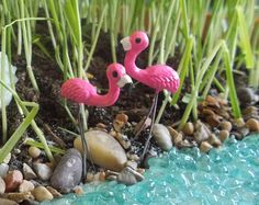 I NEED these miniature Flamingos in our Fairy Garden! Adorable! (Affiliate)