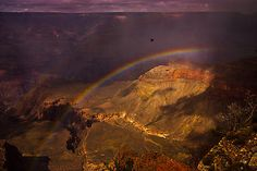 A bird flight through Grand Canyon over a rainbow while a rain shower almost ended.  I am lucky that I was there to witness it.