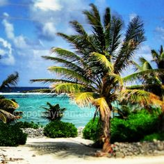 Charming North Side, Grand Cayman | Cayman Islands.  Doesn't get much better than this!