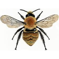 Image result for bumble bee