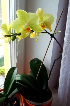 Plants, Flora, Plant, Planting