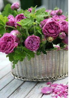 ~Rose Cottage Love~