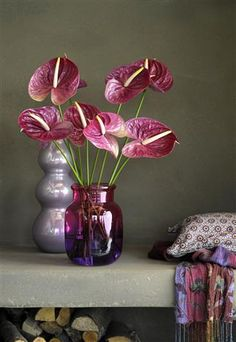 Anthurium flowers in the Pantone color of the year Ultra Violet Botanical Flowers, Flowers In A Vase, Flower Vases, Colorful Flowers, Beautiful Flowers, Cut Flowers, Church Flower Arrangements, Floral Arrangements, Summer Plants