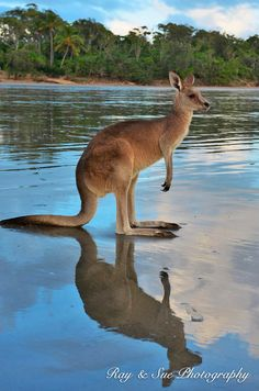 Abundant wildlife and nature walks make this a nature lover's paradise. Walking trails, some with spectacular views over the coast, range from 1 to 5 km long. To see more great pictures of Australia visit http://travelandwildlifephotography.com/