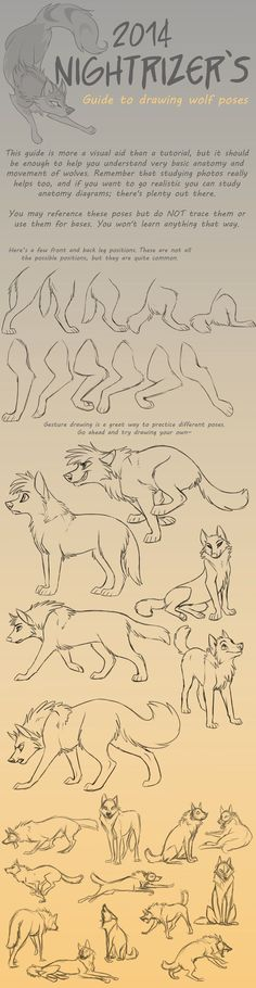 Guide to Drawing Wolf Poses by Nightrizer. Guide to Drawing Wolf Poses by Nightrizer. Drawing Poses, Drawing Tips, Drawing Sketches, Drawing Ideas, Drawing Hair, Sketching, Cartoon Drawings, Animal Drawings, Cool Drawings