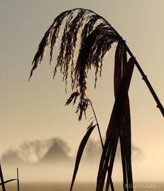 #fotografie #mist #natuur #riet #boerderij #weiland #landschap #zonsopkomst #Bolsward #Friesland