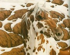 indian pony - love prints by bev doolittle and all her hidden pictures within-they are so much fun to look at Painted Horses, Illusion Kunst, Illusion Art, Native Art, Native American Art, Bev Doolittle, Indian Horses, Horse Artwork, Horse Paintings