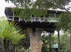 Casa de Frans Krajcberg – artista plástico que desenha em raízes e troncos tem sua própria casa na árvore em Nova Viçosa, litoral sul da Bahia, construída sobre o tronco de uma árvore de 2,60 metros de diâmetro.