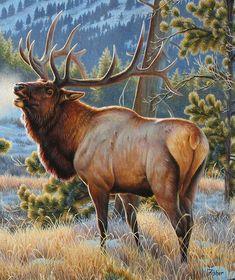 """""""Elk in Meadow"""" Luxury Queen Heavy Plush Blanket Hunting Art, Hunting Dogs, Hunting Painting, Elk Pictures, Animal Pictures, Wildlife Paintings, Wildlife Art, Elk Silhouette, North American Animals"""