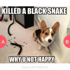 Funny or nahh Click here to vote @ http://wishbone.io/funny-or-nahh-39105555.html?utm_source=app&utm_campign=share&utm_medium=referral