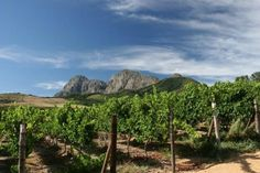 Hot and Dry Vintage Delivers Classic Chardonnay from Backsberg Estate Cellars