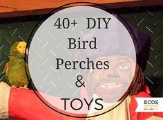 40+ DIY Bird Perches & Toys