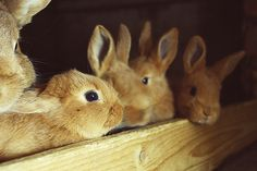 rabbits!! CUTE