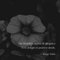 The Buddhist notion of diligence is to delight in positive deeds. — Ringu Tulku