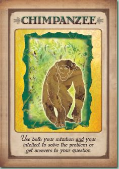 messages from your animal spirit guides | Message From Your Animal Spirit Guide
