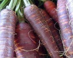 Kosmická mrkev - Neobvyklá barva tmavě fialové Mrkve úrčitě oživí a znevšení jakýkoli salát nebo polévku.  Nešlechtěné odrůdy mrkve pěstujeme jako běžné druhy. Vyséváme přímo na záhon při teplotách nad 17 °C.
