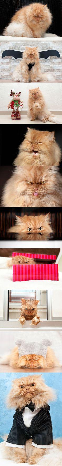 Böse_Katze