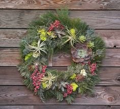 Tillandsia wreath - updated wreath using tillandsia and echeveria (Pintura Botanicals can create one for you)