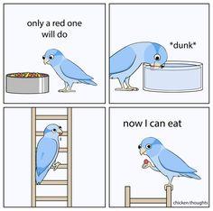 Most 21 Best Very Funny Memes Funny Animal Memes, Cute Funny Animals, Cute Baby Animals, Animals And Pets, Funny Birds, Cute Birds, Cockatiel, Budgies, Funny Parrots
