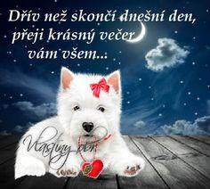 Husky, Teddy Bear, Night, Dogs, Life, Facebook, Pet Dogs, Teddy Bears, Doggies