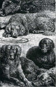a cross between a water spaniel and setter, and two crosses between a setter and a St. John's Water Dog.