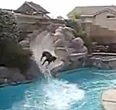This Dog Loves the Water Slide!  The Animal Video of the Day!!!  ... from PetsLady.com ... The FUN site for Animal Lovers