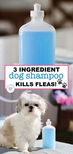 Homemade Dog Shampoo Recipe that KILLS FLEAS! funny - Real Time - Diet, Exercise, Fitness, Finance You for Healthy articles ideas Flea Shampoo For Dogs, Homemade Dog Shampoo, Puppy Shampoo, Homemade Facials, Homemade Conditioner, Homemade Deodorant, Diy Tumblr, Shih Tzus, Kill Fleas On Dogs