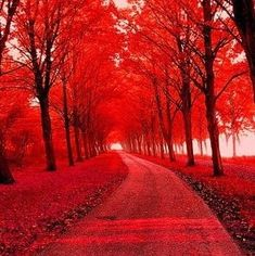 """chakra Red - Being in nature is """"grounding"""" Theme Nature, Simply Red, Red Tree, Pink Trees, Red Aesthetic, Shades Of Red, Nature Pictures, Beautiful Landscapes, Wonders Of The World"""