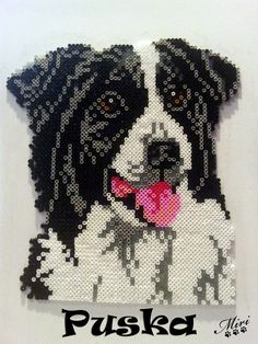 """Puska"" Border Collie hama beads by Las Miri Creaciones"