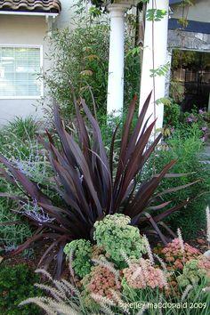Phormium Black Adder, with Hylotelephium spectabile 'Autumn Joy' in front, Perovskia atriplicifoli in rear